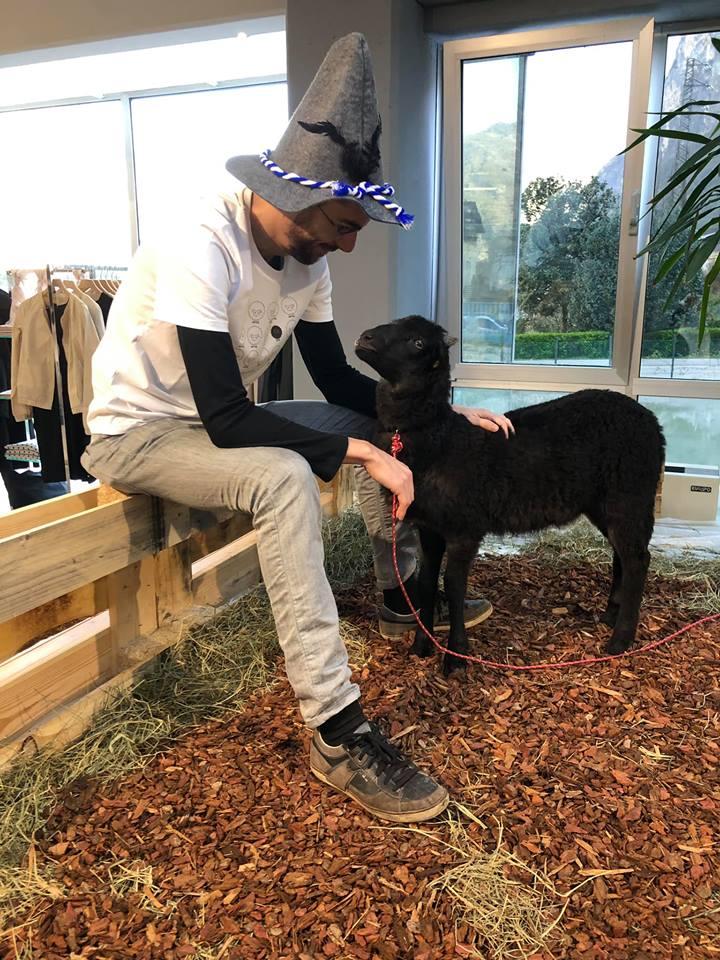 pecorella in negozio